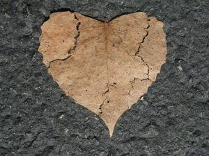 heart-742712_960_720