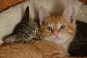 cat-1548585_960_720
